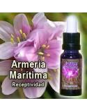 ARMERIA MARITIMA 15 cc. ESENCIAS TRIUNIDAD