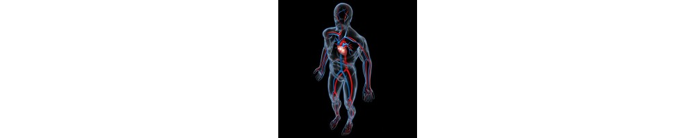 ▷ Sistema o aparato circulatorio mueve la sangre por el cuerpo ✅