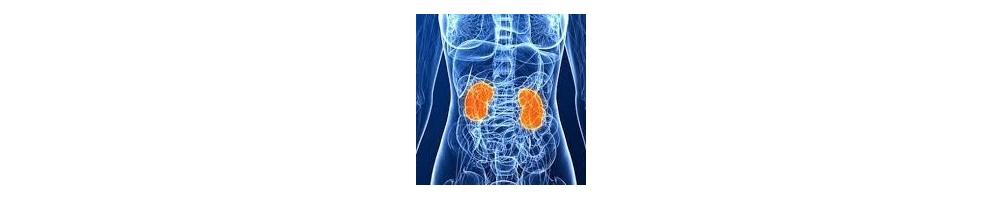 ▷ Sistema renal o urinario elimina  las toxinas. ✅