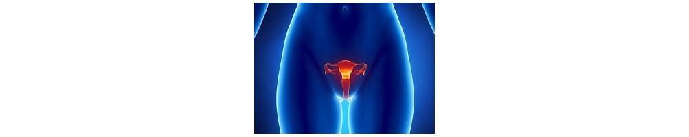 ▷ Sistema reproductor o aparato genital. ✅
